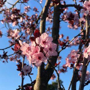 blooms r us